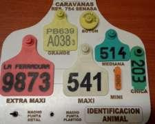 Caravanas Senasa Y Comunes Identificación Animal