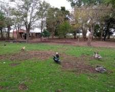 Campo en Alquiler en Ranchos, Prov. de Bsas