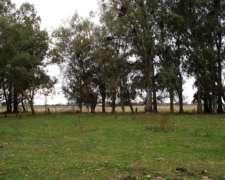 Campo Aptitud para Ganadería