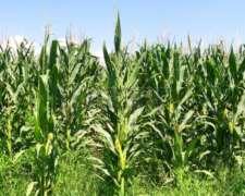 Se Alquila en Zona de Loberia 3600 H Excelentes Agricolas