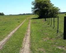 Campo en Venta 84 Has en Castelli Sobre Ruta U$S 5.500 la Ha