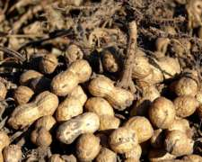 Alquilo Campos para Cultivo de Mani/soja