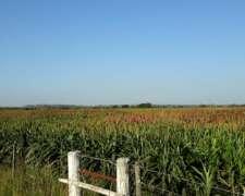 65 Has. en Providencia, Campo Mixto, Ganadero