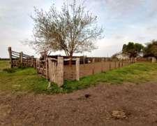 420 Hectáreas Ganaderas con 60 Has Limpias, Lucas Norte.