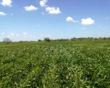 28 Ha Agrícolas Sanford
