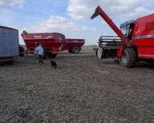 Vendido - 11 Has-alta Producción Agropecuaria