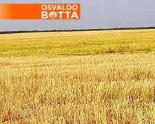 Winifreda 650 Has Limpias, Sobre Ruta a Solo U$s1650/ha.