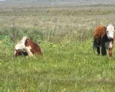 Estancia 1100ha para 500 Vacas Cria