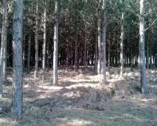 Vendo Campo Forestado en Misiones
