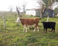 Vendo o Permuto Vaquilla