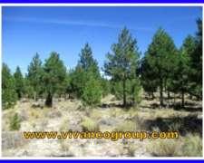 Campo 748 Has. - con Forestación - Paraje Alicurá - Neuquén