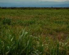 Campo en Corredor Bioceánico Pehuenche, San Rafael, Mendoza