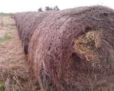 Liquido 1200 Rollos de Alfalfa