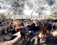 Campo en las Lomitas. Formosa. 6800 Has. Agrícola