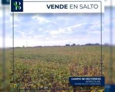 58 Hectareas Agricolas Salto- Arrecifes