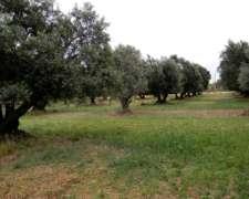 30 Hectareas , Cruz Del Eje -cordoba , Agricola