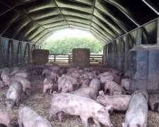 Criaderos Más Rentables - Kit Cama Profunda Cerdos