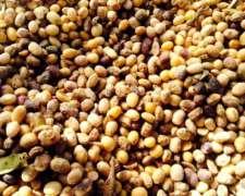 Compramos Bolsones De Soja,maiz Y Trigo Podridos