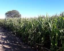 260 Has Agrícolas en Monte Cristo, a TAN Solo 20