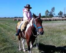 Yegua Tobiana De Andar