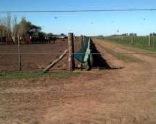 Comederos Balanceado Feed Lots. Lona Pvc, Rafia - Lonasalex