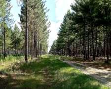 Campo con Forestación Concepción Corrientes