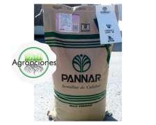 Semilla de Maiz PAN 4842 HR - Pannar