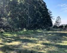Campo Forestal Ganadero Sobre Ruta