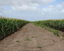 Ba3152 407 Has. Agricolas Loberia Buenos Aires