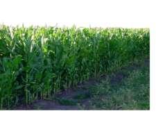 Oportunidad Vdo. 400 Has Agricolas Gral. Pico la Pampa