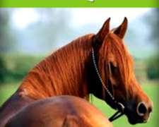 Seguro Vida Equino - Consulte Sin Compromiso