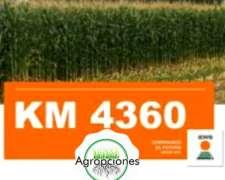 Semilla de Maiz KM4360 AS - Semillero KWS