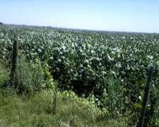 1000 Has. Agricolas Suelo 1 en Santa FE