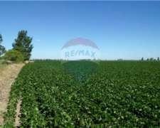 Muy Buen Campo Agrícola - a 2km Santa Clara de Buena Vista