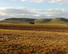 306 Ha, Campo Mixto, Balcarce, Ruta 226, Km 51,5