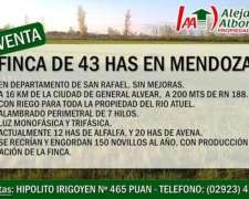 43 Has en Departamento San Rafael, Mendoza