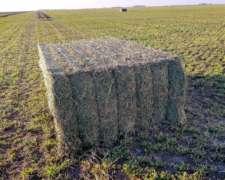 Heno de Alfalfa / Megafardos y Rollos de Alfalfa