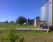 Fabrica Planta Extrusion de Aceite Alimento Balanceado Biodi