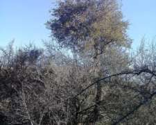 Vendo Campo (monte Virgen) Loreto Santiago del Estero