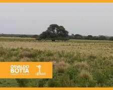 17 Mil Hectáreas en Victorica, la Pampa