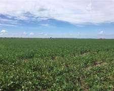 Dueño Vende Campo Agricola 99 Has. Cel.(0341) 155 194 964