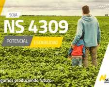 Semilla de Soja NS 4309 - Semillas Nidera