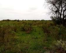 12 Ha Campo Agricola Ganadero Sobre Asfalto.