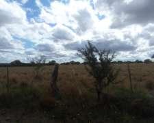 Venta 2.600 Hectáreas en la Adela, la Pampa 1