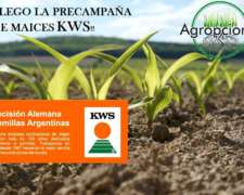 KWS Km3800 Maiz Agropciones