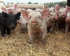 Se Necesita Empleado Para Criadero De Cerdos.