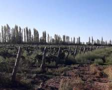 Fina en Produccion en la Llave Mendoza
