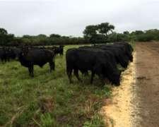 El Mejor Campo del Chaco. 2.500 Has. Mixto, Act. Ganadero
