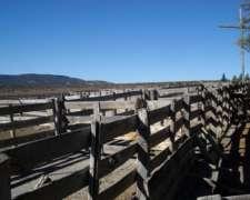 23.000 Ha Paso de los Indios - Chubut