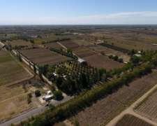 Pcia. de Mendoza - San Martín (bodega) 13 Has